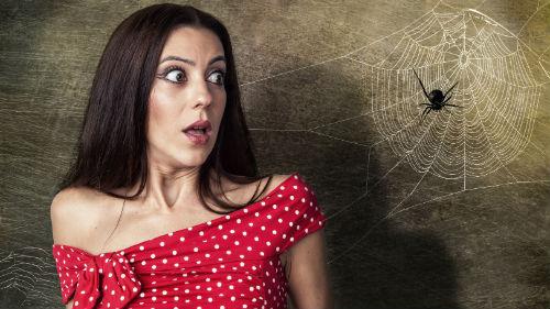 к чему снится черный паук женщине