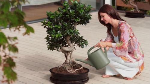 поливать комнатные растения