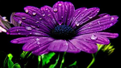 цветы фиолетового цвета во сне