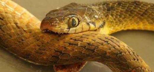 хвост змеи во сне