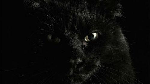 темное животное