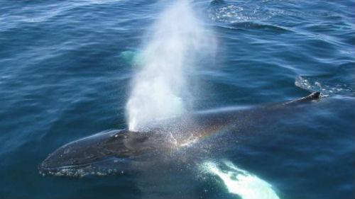 дыхание кита