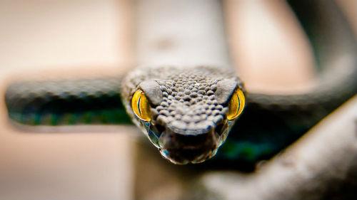 к чему снится укус змеи женщине