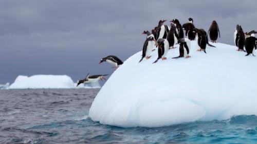 плыть на льдине