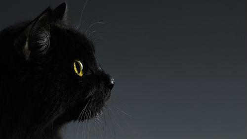 картинки черный котик