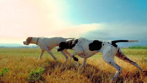к чему снятся бегущие собаки за добычей