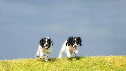 черно белые псы