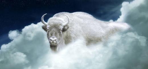 белый бык во сне