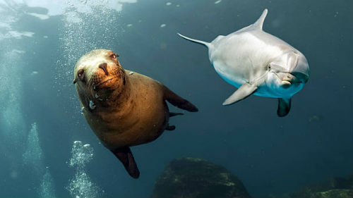 морские животные в воде
