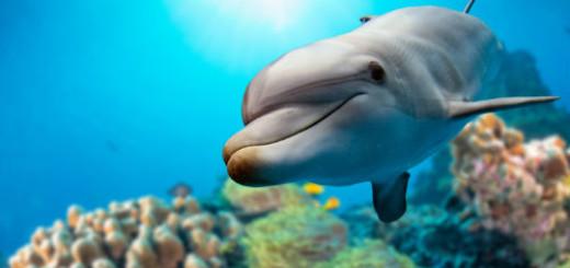 белый дельфин во сне
