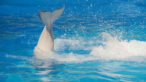 к чему снится белый дельфин в море