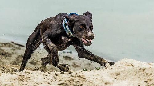 бежать от собаки во сне