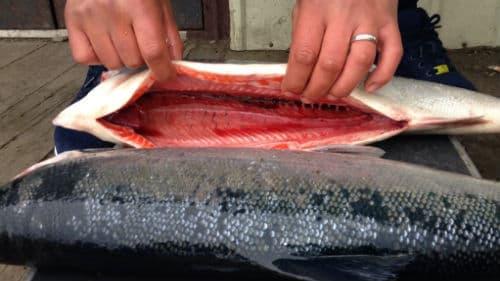 разделывать большую красную рыбину