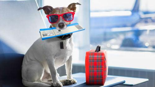 К чему снится покупать билеты на самолет билеты самолет уфа хабаровск цена