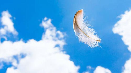 перья птицы белые