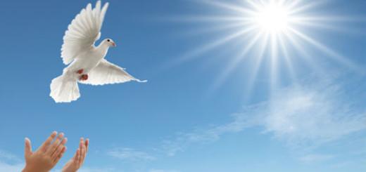 белая птица в небе во сне