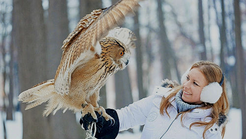 видеть птицу в руках