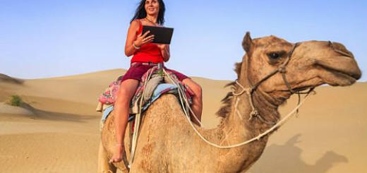 к чему снится верблюд женщине