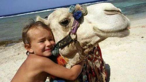 маленький белый верблюд