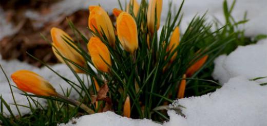 весна во сне