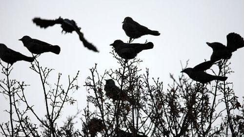 видеть стаю птиц