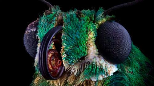 к чему снится мотылек