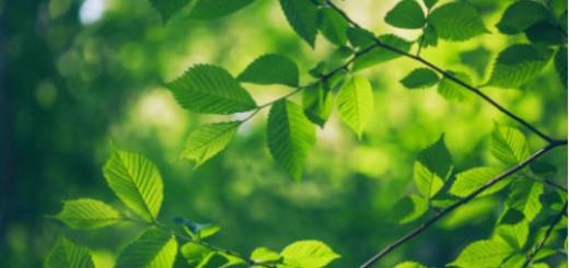 ветки деревьев во сне