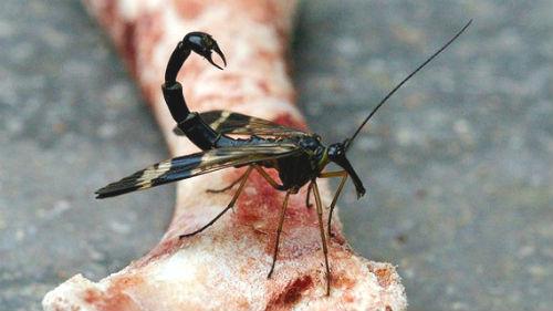 смертельное насекомое