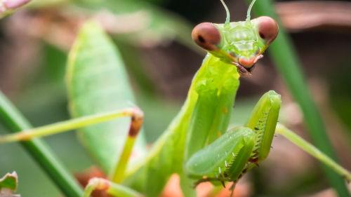 ярко зеленое насекомое