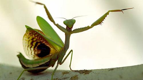 видеть крупное насекомое