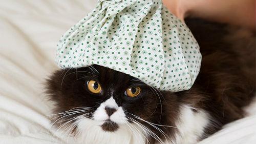 К чему снится раненая кошка в крови думаю, что