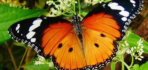 большая бабочка во сне
