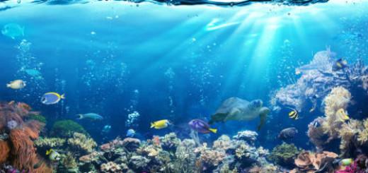 вода в море во сне