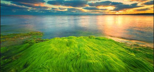 водоросли во сне