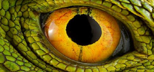 желтые глаза во сне