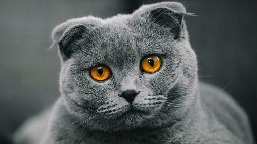 кошачьи злаза