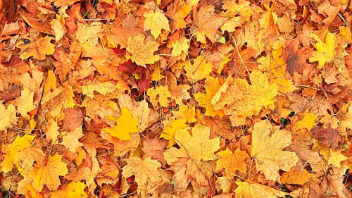 шелест листьев под ногами