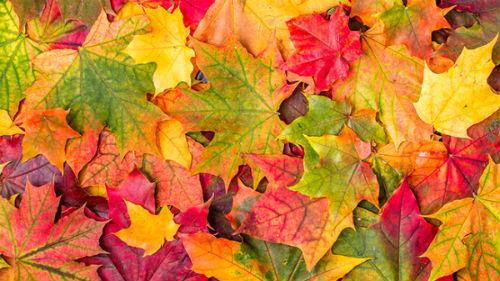 """Результат пошуку зображень за запитом """"листья"""""""