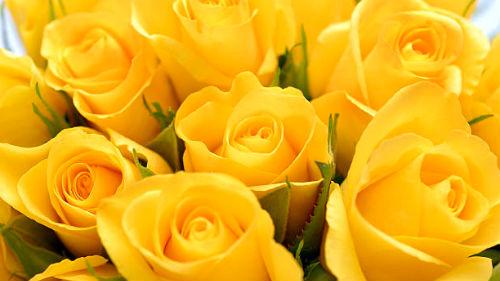 желтые розы во сне
