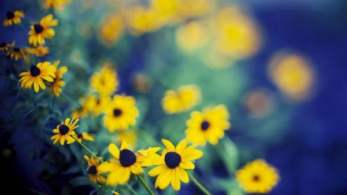 собирать полевые цветочки