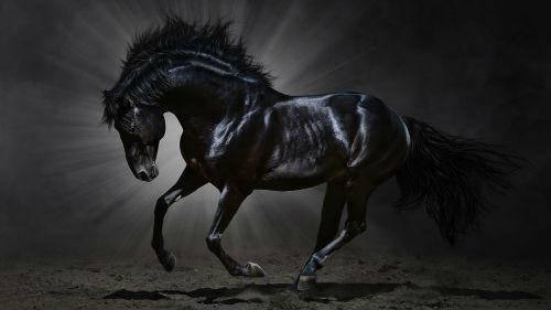 видеть резвящегося коня