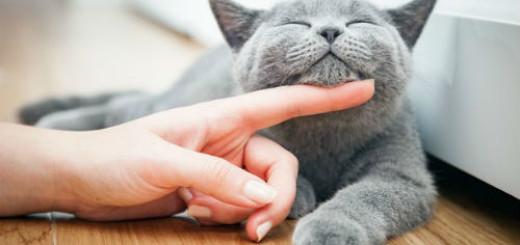 гладить кошку во сне