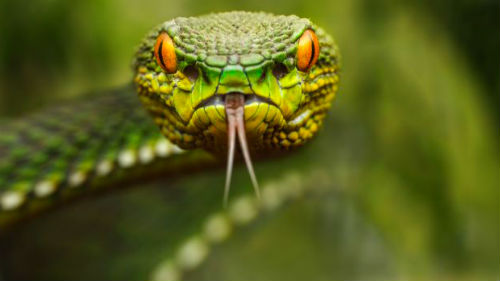 видеть как змея нападает