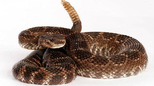 к чему снится гремучая змея