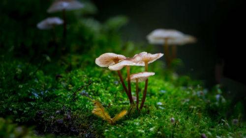 к чему снятся грибы в лесу