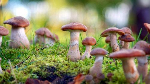 грибы в лесу во сне