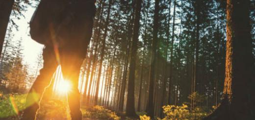 гулять по лесу во сне