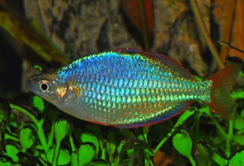 видеть рыбу в воде во сне