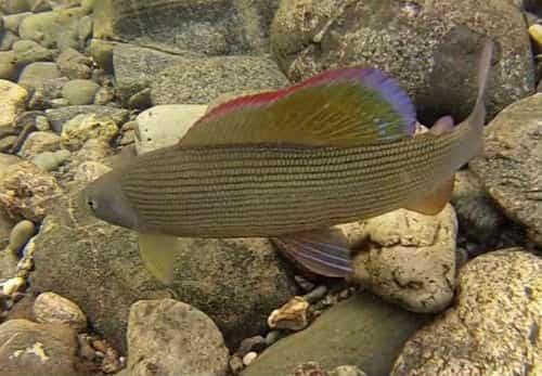 видеть рыбу в чистой воде