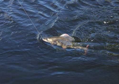 снится ловить рыбу